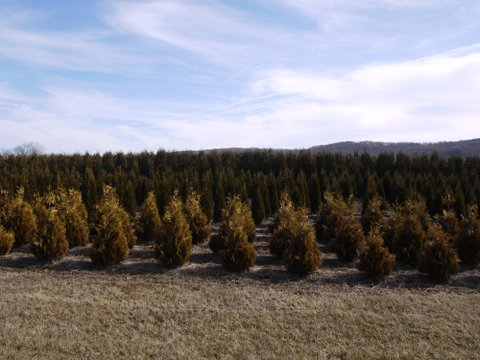 Christmas Tree Farm, Columbia Trail, Morris County, NJ