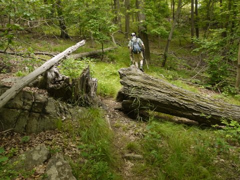 Hiker on Fishkill Ridge Trail