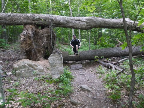 Hiker steps over one fallen tree and beneath a second one, on Long Path on Peekamoose Mountain
