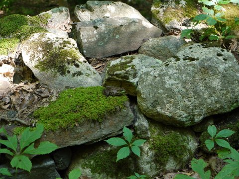 Colorful rocks, lichen, moss, plants, and a frog