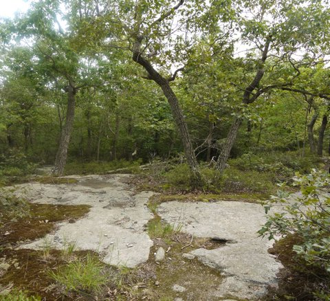Bare rock at old fire tower site, Ward Pound Ridge Reservation, Westchester County, NY